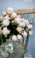 kwiaty i kwiatowe inspiracje 1