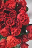kwiaty i kwiatowe inspiracje 19